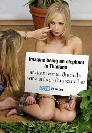 bondage nude chained for elephants